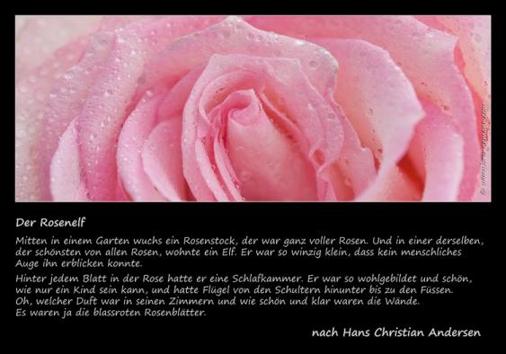 rose-mit-gedicht2.jpg