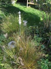 Unsere Gräser mit Herbstfärbung