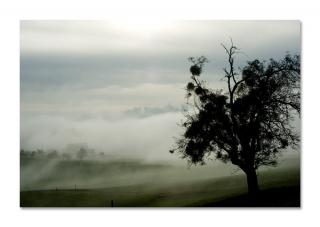 Nebelschwaden über dem Säuliamt